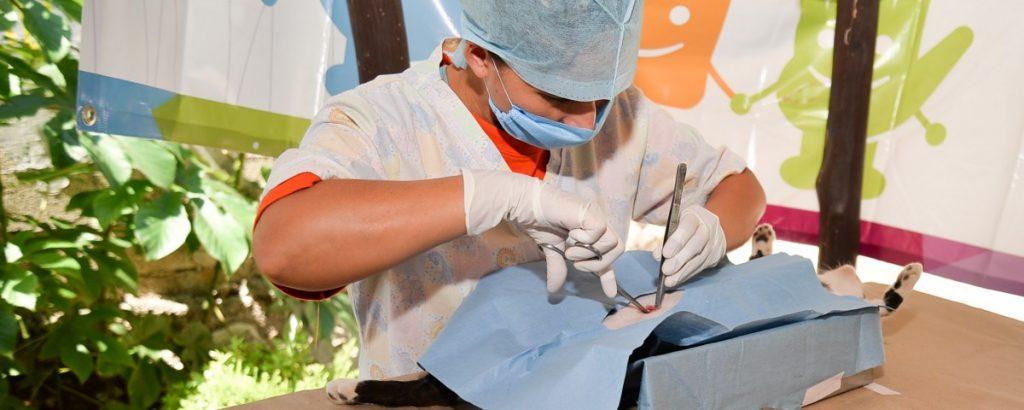 Vacunacion antirràbica en Chapab.